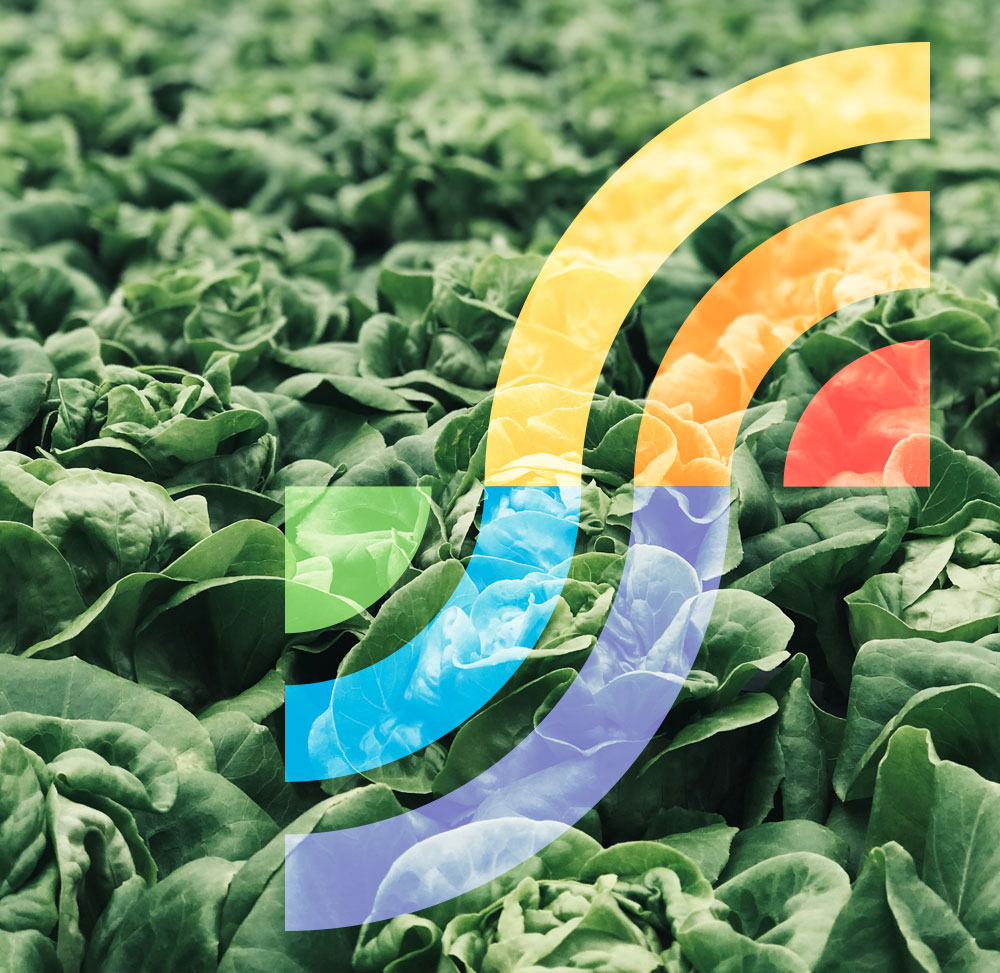 Sensorfint-vegetales